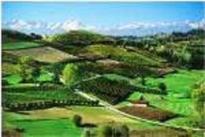 Piemonte Vineyards