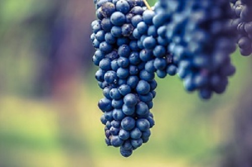 vino del bosco eliceo