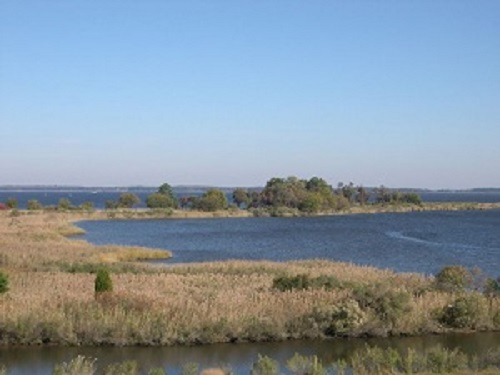 ChesapeakeTidal Wetlands