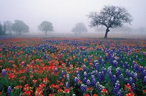 Experience the Hill Country