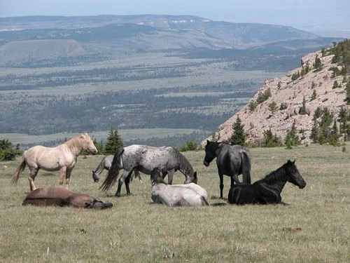 pryor mountain wild horse range montana